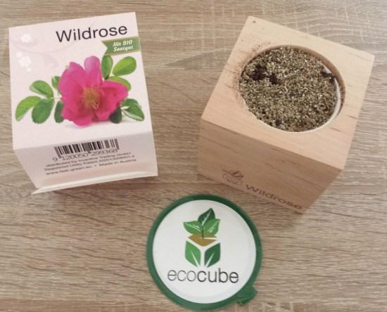 wildrose ecocube - pflanzwürfel